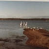 毎日更新 1983年 バックトゥザ 昭和58年7月5日 オーストラリア一周 バイク旅 11日目 22歳 雪月風花 マッドマックス ヤマハXS250  ワーキングホリデー ワーホリ  タイムスリップブログ シンクロ 終活