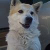 VGG16のFine-tuningによる犬猫認識 (2)