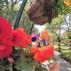 江の島サムエル・コッキング苑と江の島シーキャンドル(展望灯台)の料金