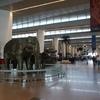 10/15(土)バグドグラ空港に着くも、シッキムに入れず・・・