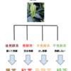 緑茶、烏龍茶、紅茶は酸化発酵度の違い