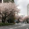 2020年の桜まつり中止でピンクの提灯がない中野通りの桜(開発で変わりゆく中野の景色シリーズ)