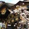 城桜と送別会