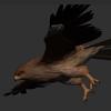 鳥のモデリング