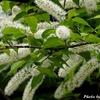 日本 知らない木の花