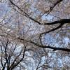 携帯と今年の桜