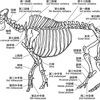 猪の骨格と肉
