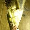 2013バチ釣行~14回目