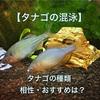 【タナゴの混泳】種類の違うタナゴの相性やおすすめは?