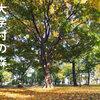 35c 大学村の森