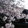 長久寺の桜