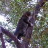 木登りは、褒めなければいけません