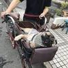 自転車で犬と出かけるママチャリ「ペットポーター」が便利だぞ