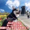 【名入れ】ユリウスK9のネームラベルを刺繍でオーダーしてみたゾ!【JULIUS-K9】