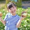 【玉ねぎ】の食べ方 古代から知られる【オニオンスライス】 旨いのは【新玉ねぎ】だけじゃない
