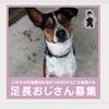 無性にペットが欲しくてたまらないので、毎月1,000円見知らぬ犬に課金することにした。