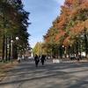 大阪秋の植木市!植木屋21さんのブースに行ってきた。