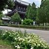 東福寺の境内で色づく半夏生。