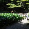 プチ旅行記⑧ 森で遊ぶ人(摩耶山・六甲山)
