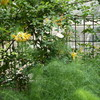 少しずつ違う香りの三敬ガーデン