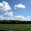 のんびりとリラックスできるアイルランドの田園風景
