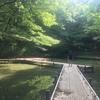 【多摩】小山田緑地 いざ多摩丘陵、息子と盛夏の虫探し