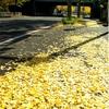 JR根岸線 黄色い路