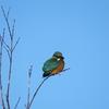 今年初の鳥撮りに行ってきました