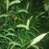 稲かれば小草に秋の日の当る