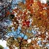 【恵庭渓谷】白扇の滝で紅葉を見てきました。