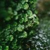 国分寺崖線上の名勝「殿ヶ谷戸庭園」をカメラ散歩しつつM. ZUIKO 17mm F1.2 PROとSUMMILUX 15mm F1.7の撮り比べ