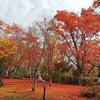 【写真】新潟のもみじ園|LuxyArt