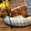犬もフカフカがイイらしい、ひんやりベッド超愛用