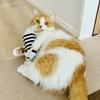 固い物好きな愛猫のために「ペットボトル+鈴+靴下」でけりぐるみを自作してみた。