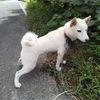 【真夏の没っちゃん&ばんちゃん】犬猫はアラ40度でも元気ですが、飼主は青息吐息で必要最小限しか動けません。。。