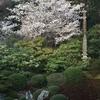 京都の夜 青蓮院ライトアップへ
