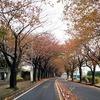久野のフラワーガーデンの秋バラ&最近お気に入りのDESTUREのしいたけの主張