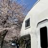 早春の伊豆とゆるキャン△⑧ラストは伊豆高原の桜並木を特等席で