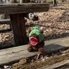 【ソロ歩き】2月13日 西の郷遊歩道に残してきた熊さんが心配