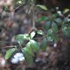 【宮島女性一人日帰り旅行レポ⑥】昼下がりの木漏れ日撮影タイム【弥山下山開始】