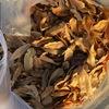 クヌギの落葉が始まり、目当ての落ち葉を集められてご満悦
