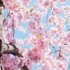 桜の季節に思う。美しいだけじゃだめかしら?