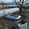 のち園 新しいプチ畝