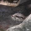 一歳児連れてベビーカーで宮島に行ってきた☆ 宮島水族館