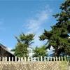 熊野神社横の空き地