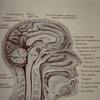 脳のフィルターRASを活かせば夢はかなっていく/「ブレイン・プログラミング」