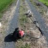 【田んぼの草刈り】を始めます。