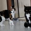 ねこ、ネコちゃん、猫さん。