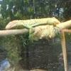 閑歩:上野動物園に行ってきました1(みんな寝てるね編)