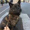 甲斐犬サンの社会性改善への道〜GUNばるo(`^´*)